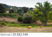 Купить «Summer landscape with cows. Filitosa», фото № 29082549, снято 20 августа 2018 г. (c) EugeneSergeev / Фотобанк Лори