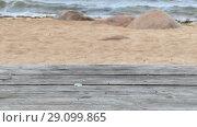 Купить «Empty Wooden Table Top on Sandy Beach Side», видеоролик № 29099865, снято 18 сентября 2018 г. (c) Ints VIkmanis / Фотобанк Лори