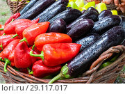 Eggplant and peppers combined together. red and green peppers. Стоковое фото, фотограф Леонид Еремейчук / Фотобанк Лори
