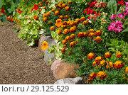 Купить «Цветочный бордюр в саду», эксклюзивное фото № 29125529, снято 10 августа 2018 г. (c) Елена Коромыслова / Фотобанк Лори