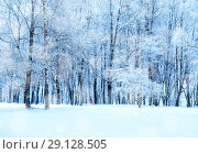 Купить «Winter landscape - frosty trees in winter forest in cold weather. Winter landscape with winter trees», фото № 29128505, снято 11 декабря 2017 г. (c) Зезелина Марина / Фотобанк Лори