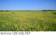 Купить «meadow with wild herbs European part of Russia», видеоролик № 29132737, снято 22 июня 2018 г. (c) Володина Ольга / Фотобанк Лори