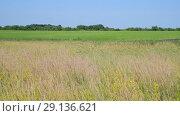 Купить «wild Russian meadow in June», видеоролик № 29136621, снято 22 июня 2018 г. (c) Володина Ольга / Фотобанк Лори