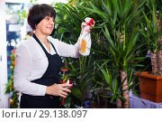 Купить «Seller tending yucca palm trees in flower shop», фото № 29138097, снято 8 ноября 2016 г. (c) Яков Филимонов / Фотобанк Лори