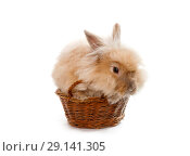 Купить «Little red rabbit in a wicker basket», фото № 29141305, снято 23 сентября 2018 г. (c) Юлия Кузнецова / Фотобанк Лори