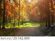 Купить «Autumn forest landscape - autumn trees in the forest at sunset light. Sunny autumn forest nature scene», фото № 29142889, снято 21 сентября 2017 г. (c) Зезелина Марина / Фотобанк Лори