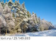 Купить «Зимний лес запорошенный снегом», фото № 29149693, снято 15 ноября 2016 г. (c) Елена Коромыслова / Фотобанк Лори