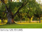 Купить «Пейзаж. Михайловское. пушкинские горы», фото № 29151845, снято 17 августа 2018 г. (c) Марина Володько / Фотобанк Лори