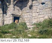 Купить «Lion in the aviary», фото № 29152169, снято 24 апреля 2018 г. (c) Типляшина Евгения / Фотобанк Лори