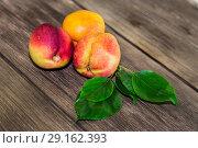 Food, fresh fruit, sweet dessert. Three ripe fresh vitamin juicy peach on a wooden table background in a rustic style. Стоковое фото, фотограф Светлана Евграфова / Фотобанк Лори