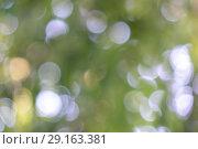 Купить «Circles bokeh on a blurred green background. Abstract beautiful layout for your ideas», фото № 29163381, снято 10 августа 2018 г. (c) Ярослав Данильченко / Фотобанк Лори