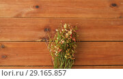Купить «wild blueberry in autumn colors on wooden table», видеоролик № 29165857, снято 30 сентября 2018 г. (c) Syda Productions / Фотобанк Лори