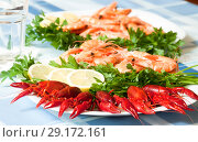 cooked shrimp and crayfish on plate close up. Стоковое фото, фотограф Татьяна Яцевич / Фотобанк Лори