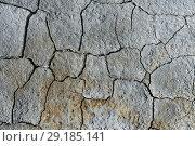 Купить «Сухая потрескавшаяся почва, фон», фото № 29185141, снято 12 сентября 2018 г. (c) А. А. Пирагис / Фотобанк Лори