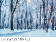 Купить «Winter landscape with frosty trees along the winter park alley - winter snowy scene in cold tones. Winter landscape scene with falling snow», фото № 29186453, снято 11 декабря 2017 г. (c) Зезелина Марина / Фотобанк Лори