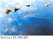 Купить «Моторная лодка идет по реке Вишера. Вид сверху», фото № 29186881, снято 24 сентября 2016 г. (c) Евгений Ткачёв / Фотобанк Лори