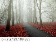 Купить «Fall park foggy nature - misty fall view of autumn park alley in dense fog. Fall landscape», фото № 29188885, снято 8 ноября 2017 г. (c) Зезелина Марина / Фотобанк Лори