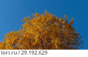 Купить «Autumn trees with yellowing leaves against the sky», видеоролик № 29192629, снято 29 сентября 2018 г. (c) Игорь Жоров / Фотобанк Лори