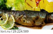 Купить «Roasted whole trout served with baked potatoes and tomatoes, fresh greens and lemon slices», видеоролик № 29224589, снято 17 сентября 2018 г. (c) Яков Филимонов / Фотобанк Лори
