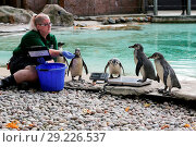 Купить «Zookeeper weigh and measures the animals at ZSL's London Zoo during the annual weigh-in. The zookeepers are responsible for more than 20,000 animals and...», фото № 29226537, снято 24 августа 2017 г. (c) age Fotostock / Фотобанк Лори