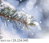 Купить «blur winter background with snow on eve branches», фото № 29234945, снято 7 февраля 2018 г. (c) katalinks / Фотобанк Лори