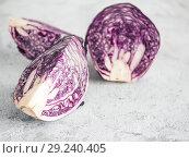 Купить «red cabbage on gray, copy space», фото № 29240405, снято 12 марта 2018 г. (c) Ольга Сергеева / Фотобанк Лори