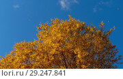 Купить «Autumn trees with yellowing leaves against the sky», видеоролик № 29247841, снято 29 сентября 2018 г. (c) Игорь Жоров / Фотобанк Лори
