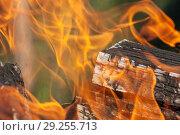 Купить «Bright fire close up», фото № 29255713, снято 5 июня 2012 г. (c) Argument / Фотобанк Лори