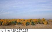 Купить «The Vast Expanses Of Russia. Golden Autumn. Yellow-red forest on a background of blue sky with small cirrus clouds.», видеоролик № 29257225, снято 21 января 2020 г. (c) Константин Мерцалов / Фотобанк Лори