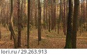 Купить «Autumn deciduous forest on clear day», видеоролик № 29263913, снято 26 июня 2019 г. (c) Володина Ольга / Фотобанк Лори