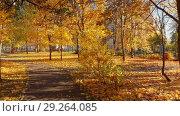 Купить «Moscow, Russia - October 17. 2018. Autumn deciduous park on clear day in Zelenograd», видеоролик № 29264085, снято 25 мая 2019 г. (c) Володина Ольга / Фотобанк Лори