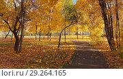 Купить «Moscow, Russia - October 17. 2018. Autumn deciduous park on clear day in Zelenograd», видеоролик № 29264165, снято 25 мая 2019 г. (c) Володина Ольга / Фотобанк Лори