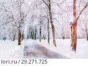 Купить «Winter colorful landscape. Snowy trees along the winter park, winter snowy beautiful nature», фото № 29271725, снято 11 декабря 2017 г. (c) Зезелина Марина / Фотобанк Лори