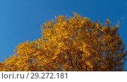 Купить «Autumn trees with yellowing leaves against the sky», видеоролик № 29272181, снято 29 сентября 2018 г. (c) Игорь Жоров / Фотобанк Лори