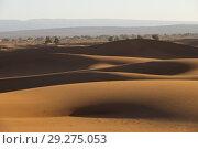 Купить «Big sand dunes in Sahara desert», фото № 29275053, снято 14 февраля 2018 г. (c) Михаил Коханчиков / Фотобанк Лори