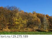 Купить «Осенний лес на фоне голубого неба», эксклюзивное фото № 29275189, снято 15 октября 2018 г. (c) Игорь Низов / Фотобанк Лори