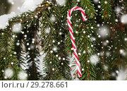 Купить «candy cane christmas toy on fir tree branch», фото № 29278661, снято 11 ноября 2016 г. (c) Syda Productions / Фотобанк Лори