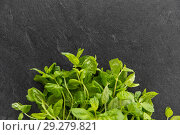 Купить «green mint leaves on stone background», фото № 29279821, снято 4 апреля 2018 г. (c) Syda Productions / Фотобанк Лори