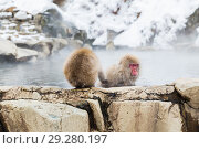 Купить «japanese macaques or snow monkeys in hot spring», фото № 29280197, снято 8 февраля 2018 г. (c) Syda Productions / Фотобанк Лори