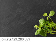 Купить «green mint leaves on stone background», фото № 29280389, снято 4 апреля 2018 г. (c) Syda Productions / Фотобанк Лори
