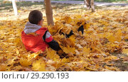 Купить «Autumn. Small children in the yellow leaves. Children play in the street with fallen leaves. Autumn grove of birches and maples. Boys throw up fallen leaves of trees in the top. Children sit across from each other on a carpet of yellow leaves and throw leaves into each other. Happy kids on the street», видеоролик № 29290193, снято 13 октября 2018 г. (c) Константин Мерцалов / Фотобанк Лори