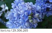 The lilac flowers. Стоковое фото, фотограф Сергей Бочаров / Фотобанк Лори