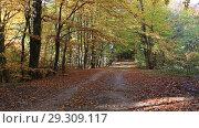 Купить «Красивый осенний лес», видеоролик № 29309117, снято 13 октября 2018 г. (c) Яна Королёва / Фотобанк Лори