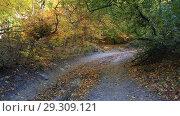 Купить «Дорога в осеннем лесу», видеоролик № 29309121, снято 13 октября 2018 г. (c) Яна Королёва / Фотобанк Лори