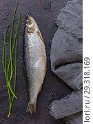 Купить «Salted herring and green onions», фото № 29318169, снято 15 октября 2018 г. (c) Марина Сапрунова / Фотобанк Лори