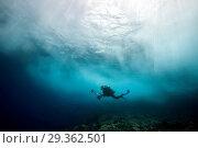 Купить «Scuba diver in surf zone, Christmas Island, Australia», фото № 29362501, снято 17 декабря 2018 г. (c) age Fotostock / Фотобанк Лори