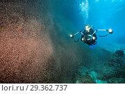 Купить «Clouds of Crab Larvae swirl near Shore, Gecarcoidea natalis, Christmas Island, Australia», фото № 29362737, снято 17 декабря 2018 г. (c) age Fotostock / Фотобанк Лори