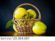 Купить «ripe fruit quince isolated on black background», фото № 29364681, снято 17 октября 2018 г. (c) Peredniankina / Фотобанк Лори
