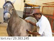 Купить «Man shearing gray horse with trimmer», фото № 29383245, снято 2 октября 2018 г. (c) Яков Филимонов / Фотобанк Лори