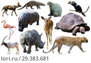 Купить «Collage with African mammals and birds», фото № 29383681, снято 22 января 2019 г. (c) Яков Филимонов / Фотобанк Лори